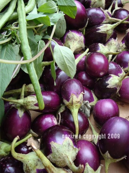 eggplantwidecopyright